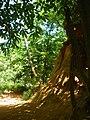 Sentier des ocres 2.JPG