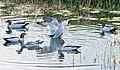 Seven Ducks Bells creek-02+ (208926504).jpg