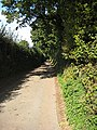 Shady lane - geograph.org.uk - 991958.jpg