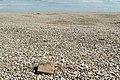 Shingle, Orford Ness - geograph.org.uk - 935159.jpg