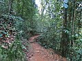 Sinharaja Forest trail 2.JPG