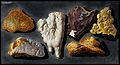 Six pieces of lava from inside the crater of Mount Vesuvius. Wellcome V0025288.jpg