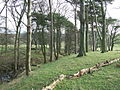 Small strip of woodland on the eastern side of Hellifield Moor - geograph.org.uk - 633134.jpg