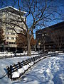 Snow-covered benches in Dupont Circle.JPG