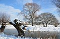 Snow makes the world at Oosterbeek Rhine river foreland very imposant - panoramio.jpg