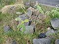 Solanum mauritianum (Habitus).jpg
