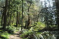 South Whidbey State Park 06.jpg