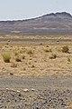 Spotted Sandgrouse (4804567676).jpg