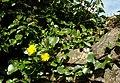 Spring at Clandeboye (4) - geograph.org.uk - 754241.jpg