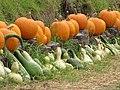 Starr-111004-0577-Cucurbita pepo-pumpkin and gourd display-Kula Country Farms-Maui (25025102601).jpg