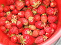 Strawberries 24 August 2007-2.JPG