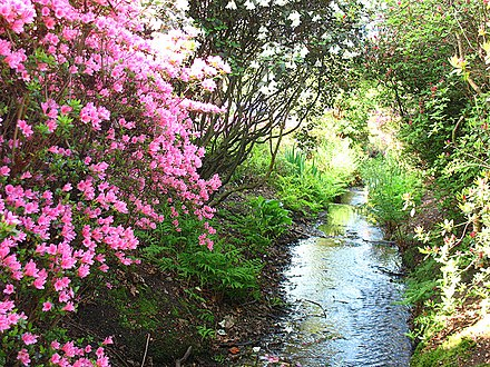 A stream flows through the Isabella Plantation Stream in Isabella Plantation - geograph.org.uk - 1273691.jpg