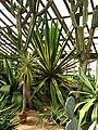 Succulents greenhouse 02.JPG