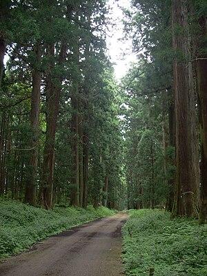 Tochigi Prefecture - Nikko Cedar Avenue