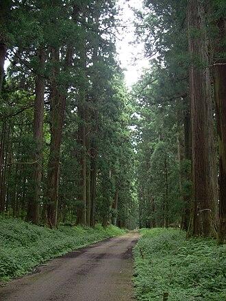 Tochigi Prefecture - Nikkō Cedar Avenue