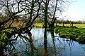 Tadnoll Mill Stream - geograph.org.uk - 1219225.jpg