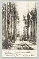 Takaharjun parantolalle Ankkalammen pohjoispuolelta nouseva tie, 1900s PK0275.jpg