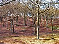 Tandal Hill Country Park.jpg