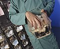 Technician shows three black mice in cage, diagonal angle.jpg