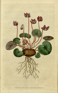 The Botanical Magazine, Plate 4 (Volume 1, 1787).png