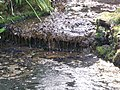 The Dell at Sandringham - mini waterfall-4574607804.jpg