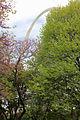 The North leg peeks through the trees (5616813817).jpg