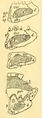 The Osteology of the Reptiles-049 nuygygyyyyyyyyy uyuhygtfyug hghg.png