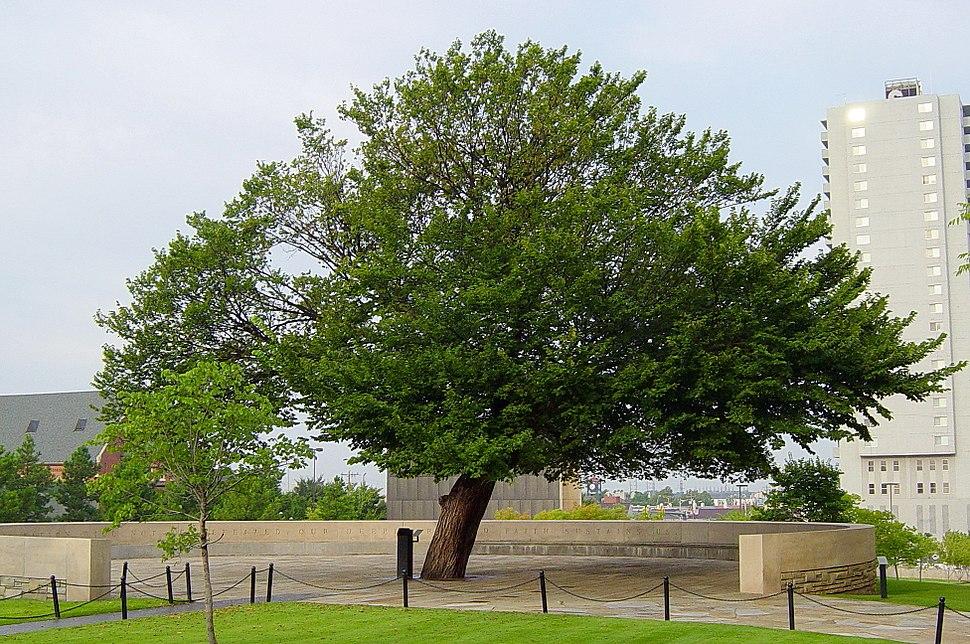 The Survivor Tree at the Oklahoma City National Memorial