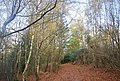 The Wealdway, Five Hundred Acre Wood - geograph.org.uk - 1584978.jpg