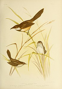 The birds of Australia (16964798886).jpg