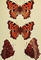 The butterflies of the British Isles (1906) (20323415548).jpg