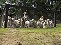 The hounds - geograph.org.uk - 499892.jpg