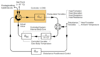 Thermoregulation in humans - Simplified control circuit of human thermoregulation.