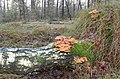 These birch at Deelerwoud is covered by nice mushrooms - panoramio.jpg