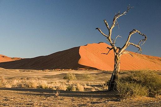 Thorn Tree Sossusvlei Namib Desert Namibia Luca Galuzzi 2004