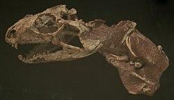 Tianyusaurus.jpg
