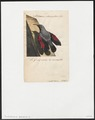 Tichodroma muraria - 1700-1880 - Print - Iconographia Zoologica - Special Collections University of Amsterdam - UBA01 IZ19200389.tif