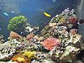 Tierpark Hellabrun - aquarium.jpg
