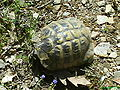 Tortoise bg.JPG