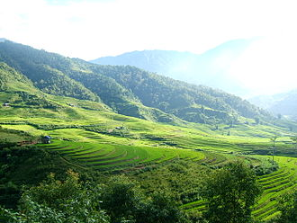 Rice fields in Tram Tau District Tram Tau fields.jpg