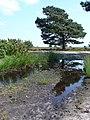 Track across Grip Heath - geograph.org.uk - 836374.jpg