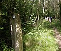 Track through Great Wood - geograph.org.uk - 204211.jpg