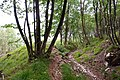 Trail in Belluno 5.jpg