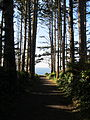 Trail to North Head Light, 2011.JPG