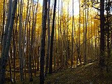 Trailhead, Trail 77, Gooseberry Trail, Cibola, National Forest - panoramio (1).jpg
