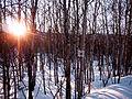 Trans Canada Trail (6928791771).jpg