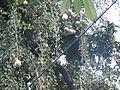 Tree, beal tree.JPG