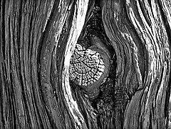 A knot on a tree at the Garden of the Gods public park in Colorado Springs, Colorado (October 2006).