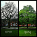 Tree in Leicester.png