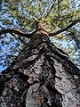 Trees, The lifegivers.jpg